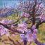 Purple Peach Blossom