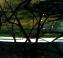 Prunus Branches in a Green Landscape